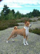 My dog, Basenji, Carmen Cita