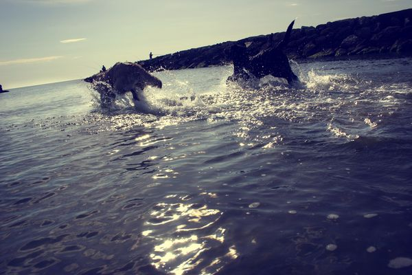 My dogs at the sea side