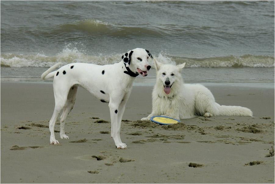 My dogs ... Luna and Inca .......