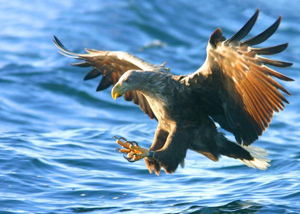 My favourite eagle