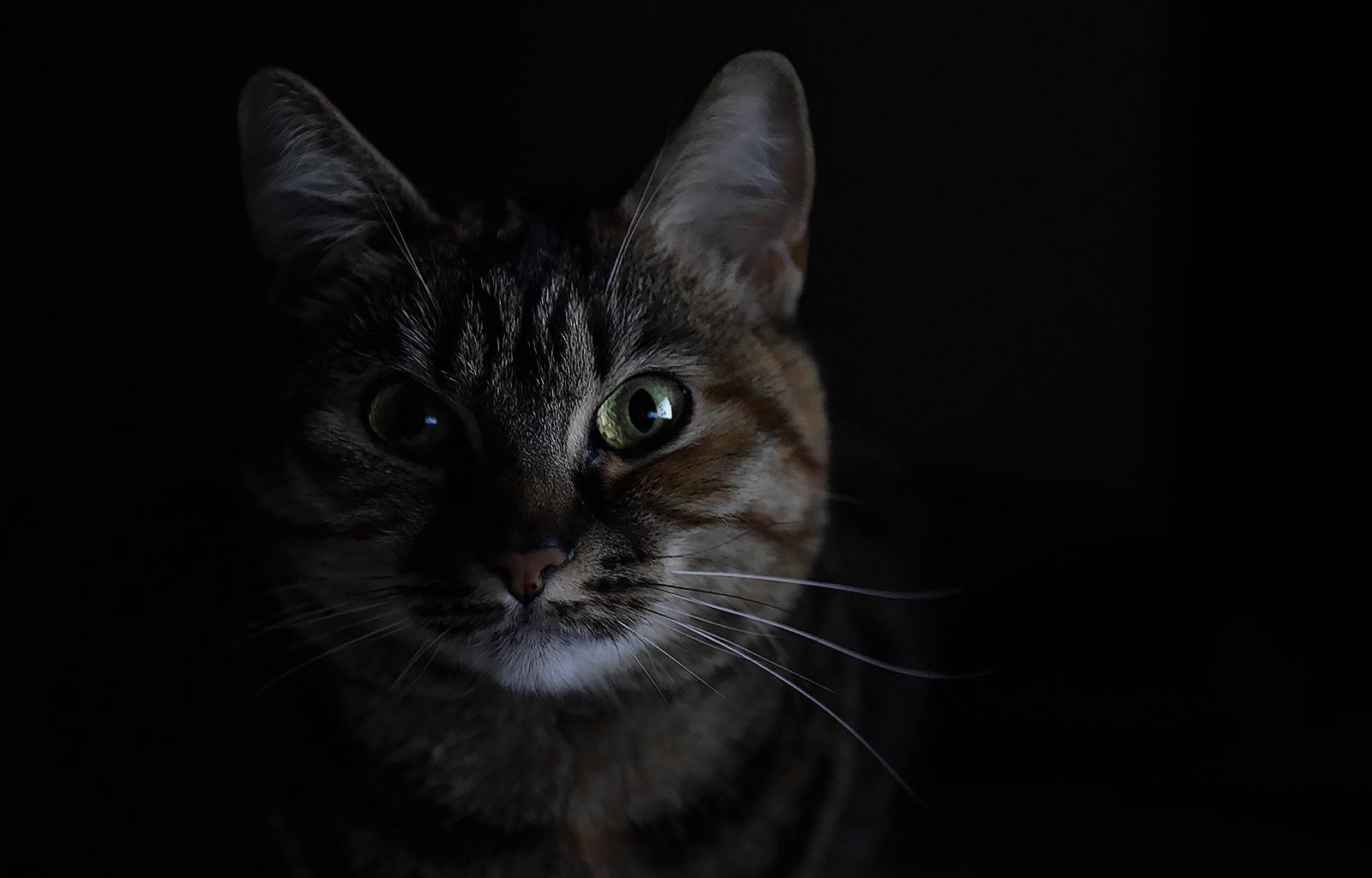 My feline - CLK