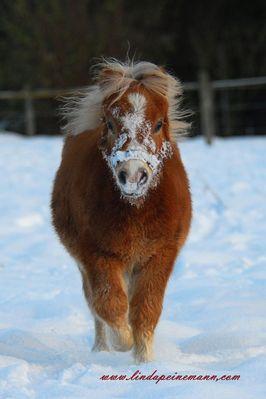 My first Snow - Ich bin 6 Monate Alt.