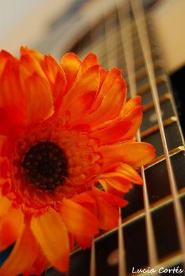 My guitar, my flower