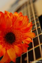 My guitar, my flower