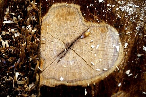 My heart is of wood