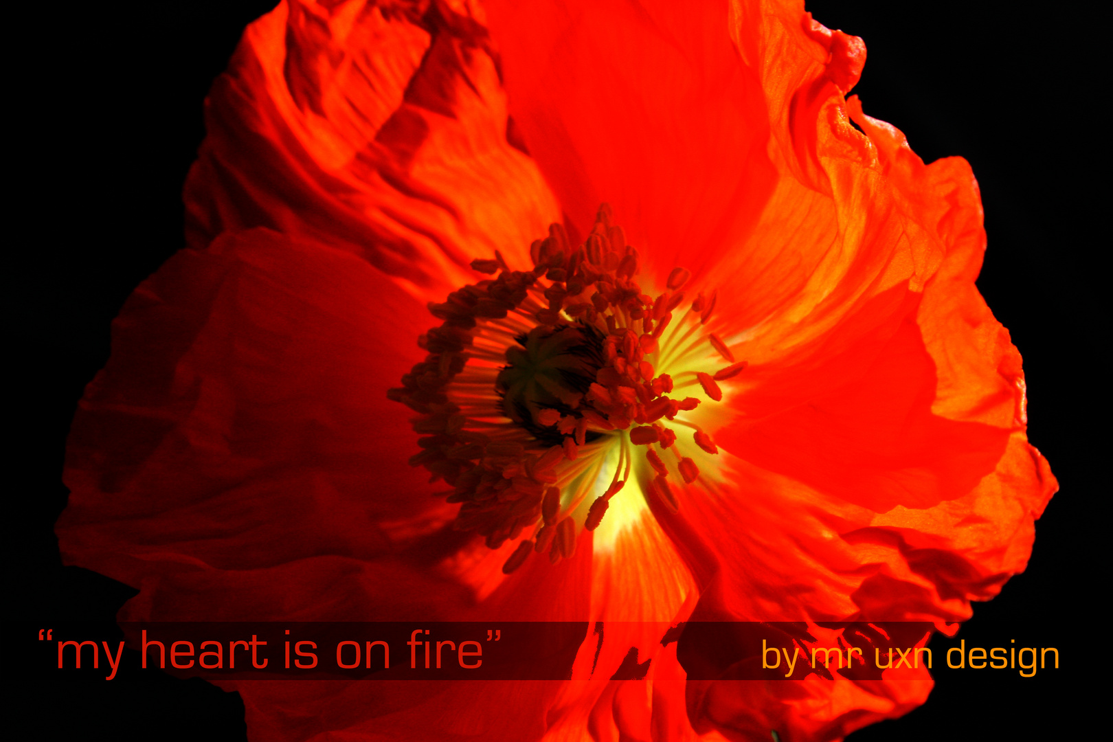 """my heart is on fire"""