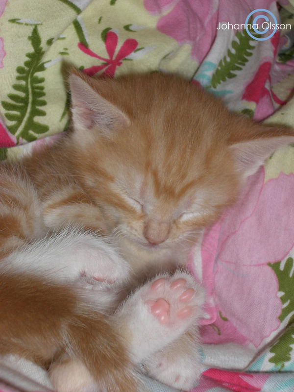 My Kitten Lady Morris