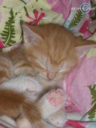 My Kitten Lady Morris <33