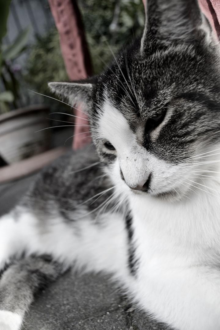 My little cat Charlie