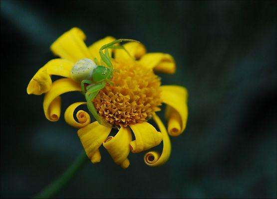 My Little Green Spider 5