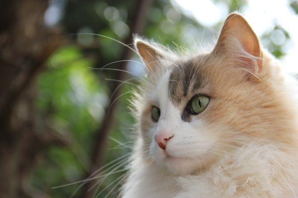 My Love Cat IRA