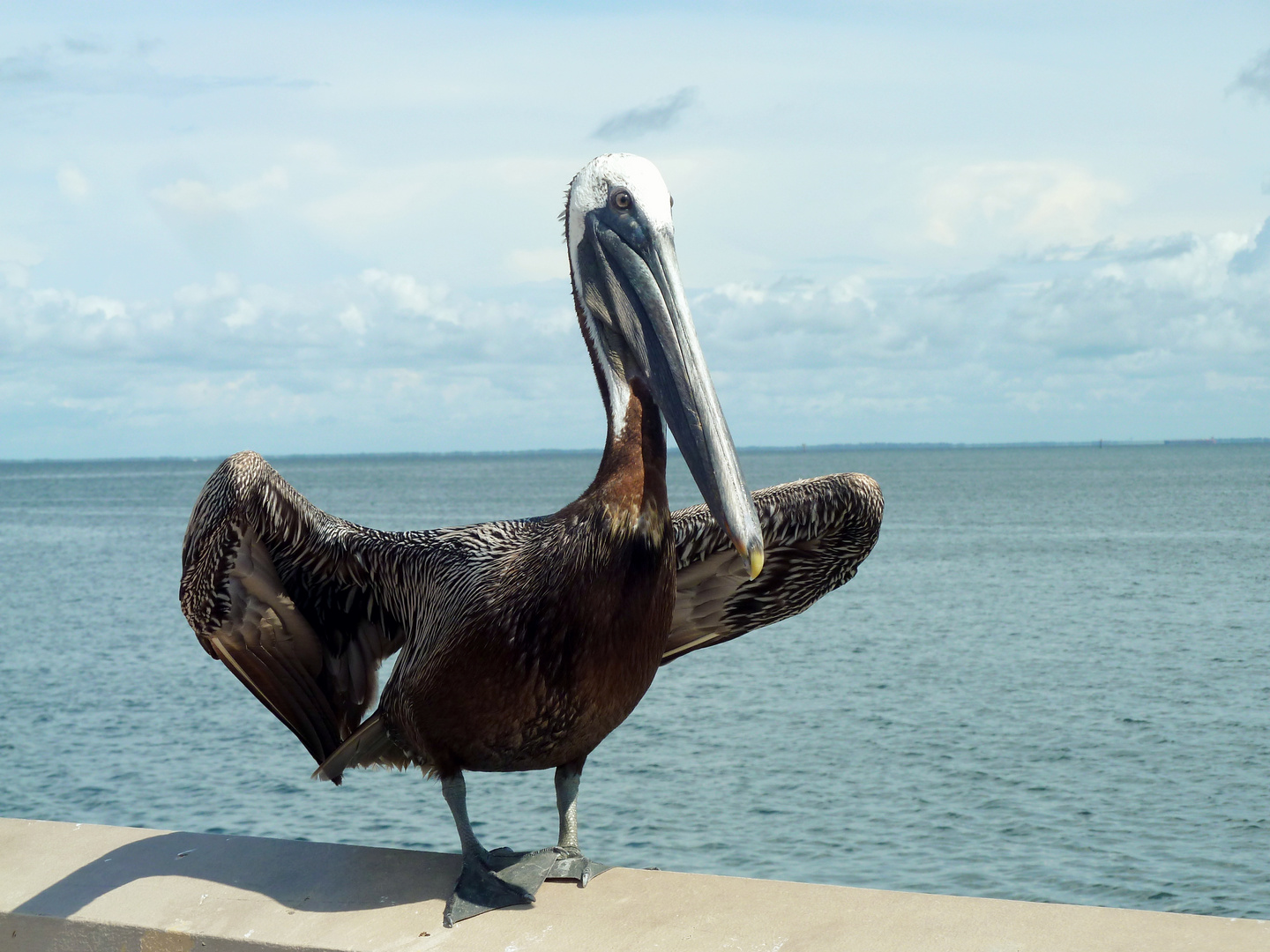My Name Is Pelican