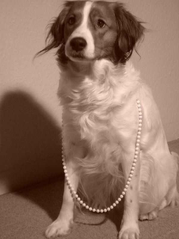 My noble Dog