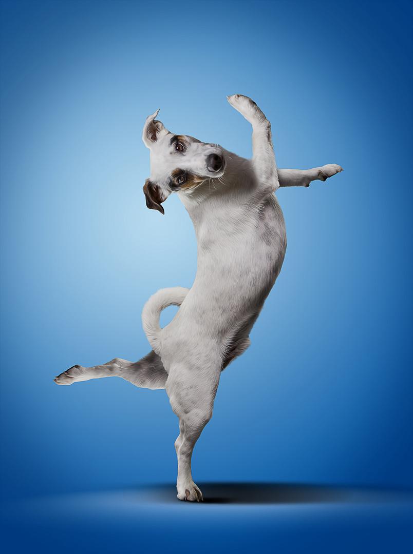 My Own Yoga Dog #2