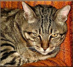 My sweet old cat.