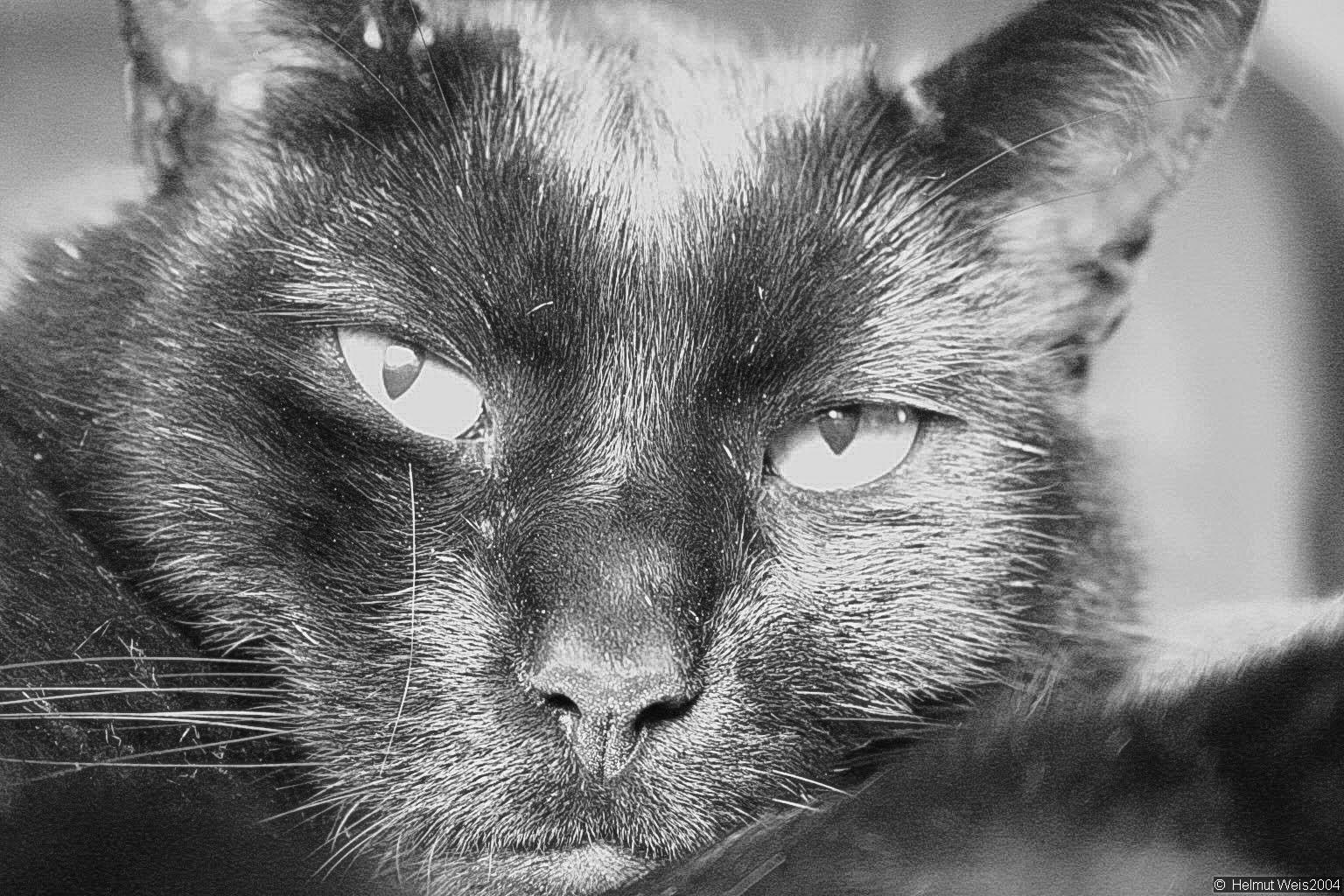 My Tom Cat Lefty