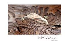 my way (5)