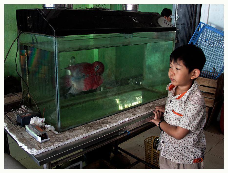 Myanmar 53 - oder  Die Gefangenschaft
