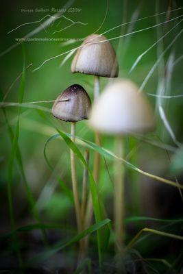 Mycène dans les herbes