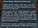 Myrte-Text