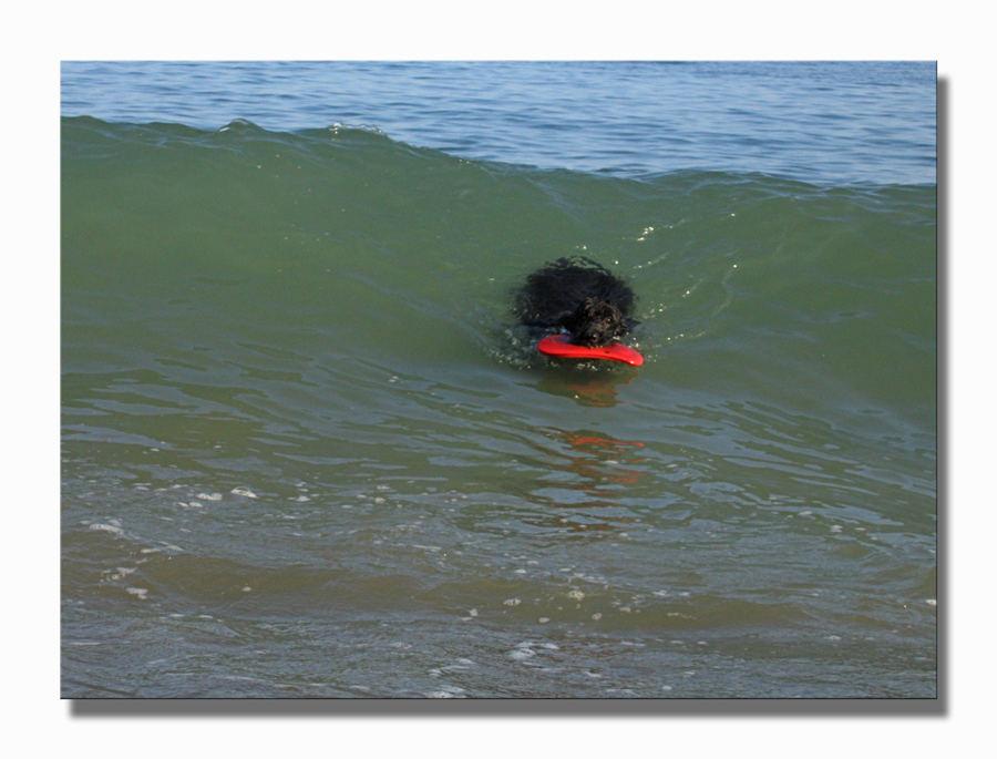 Myself beim Surfen  ..... und auf geht's ....!