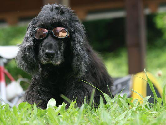 Myself mit Sonnenbrille ...