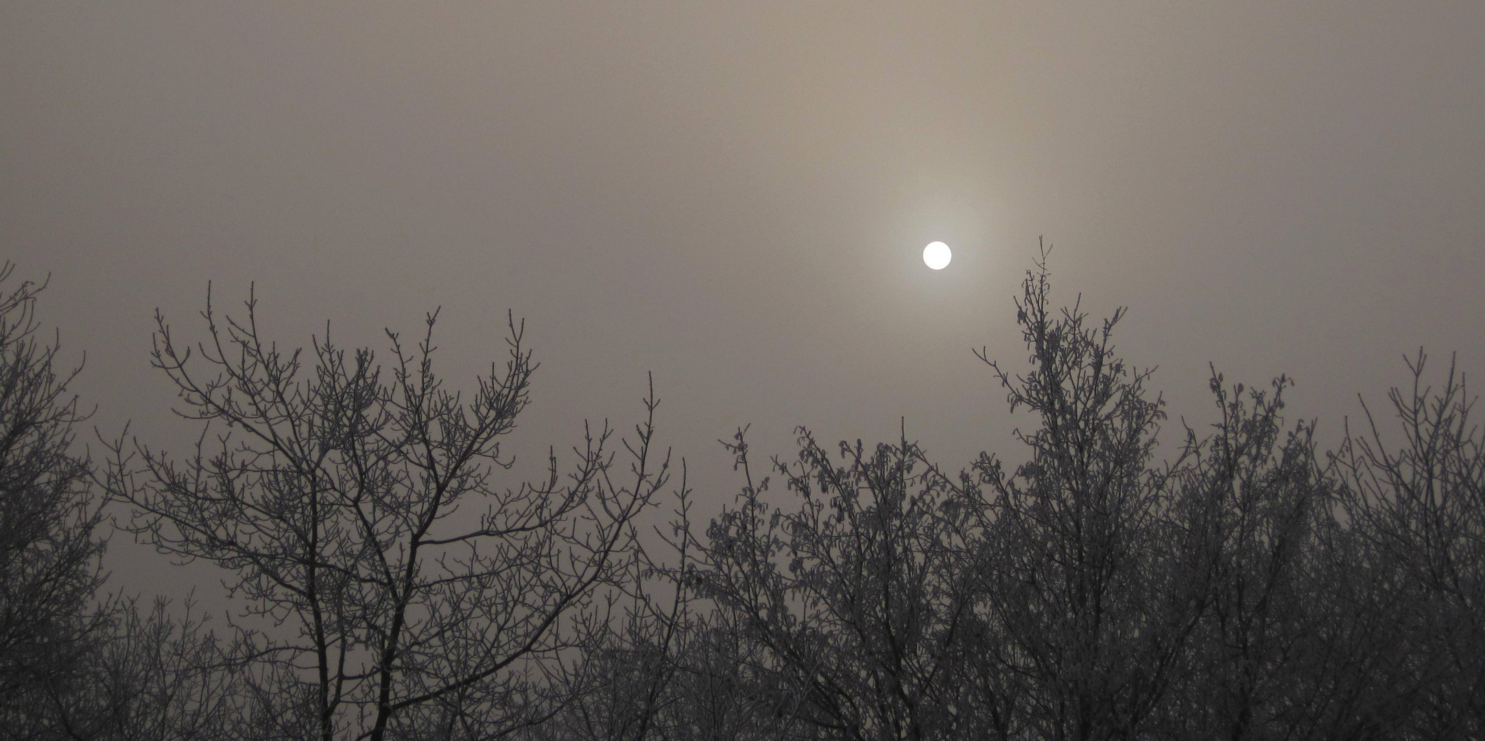 Mysterious Misty Morning 2