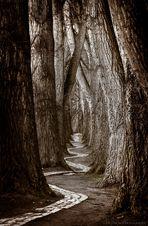 Mystic Alley