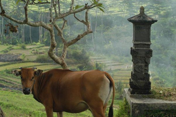 Mystic Bali