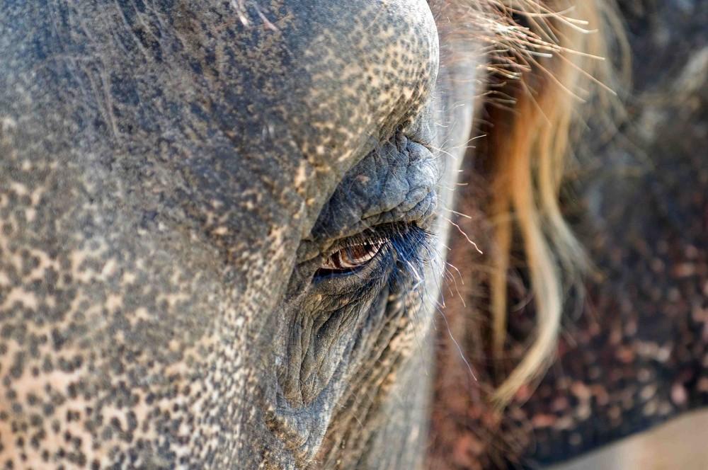 Mystic elephant