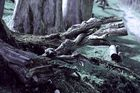 Mystic Forest 2