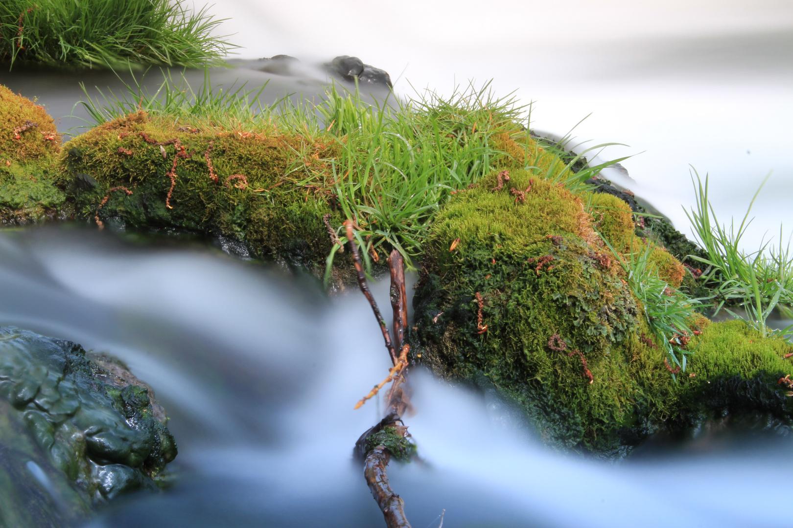 Mystic Nature 2