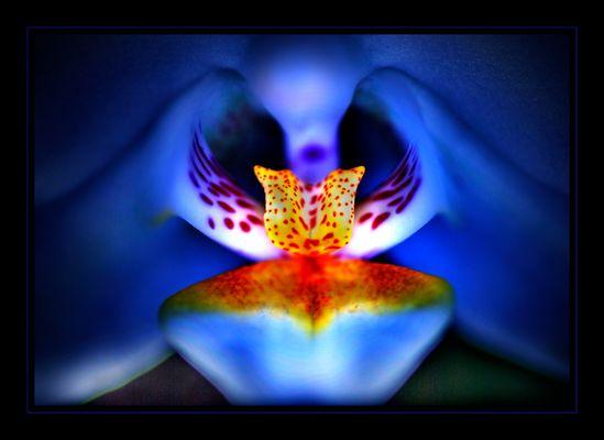 Mystic Orchid...