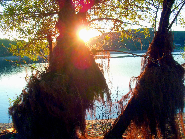Mystic Trees