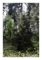 Mystic Trees I