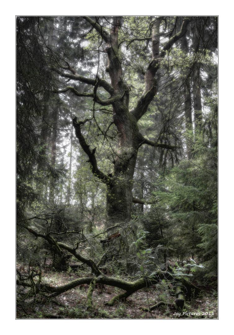 Mystic Trees III