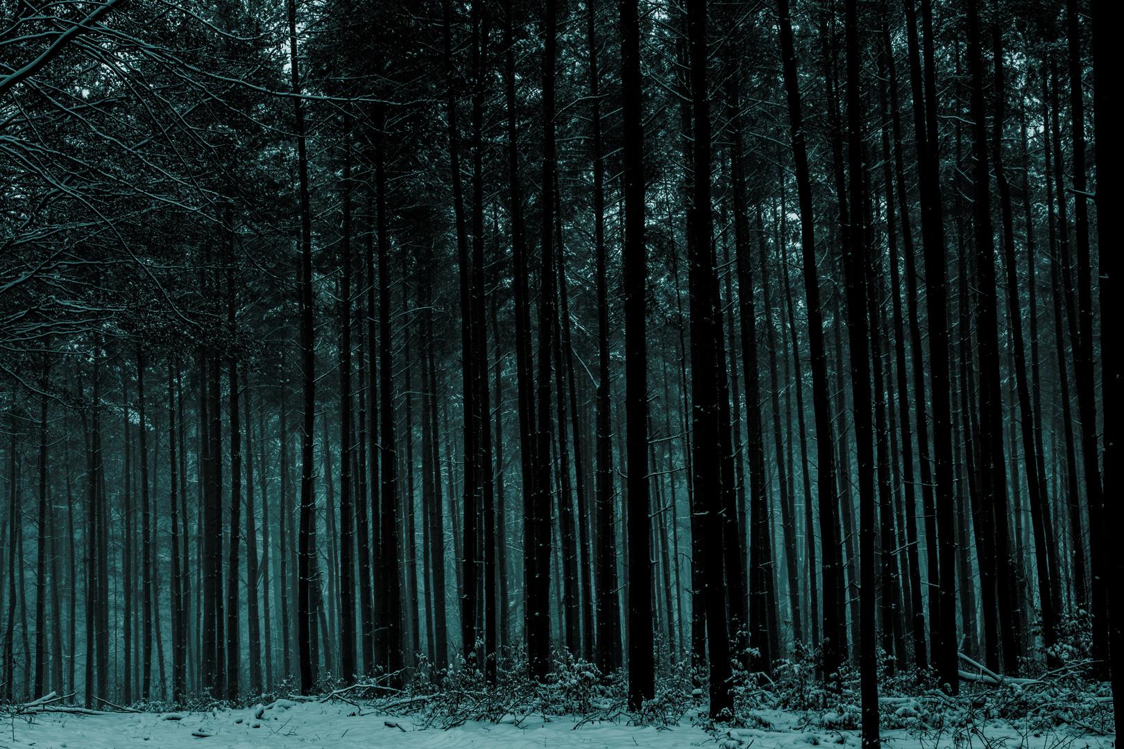 Mystic Winter