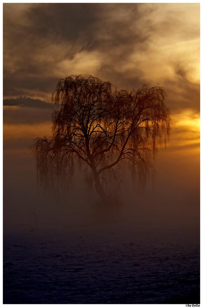 Mystik- Baum