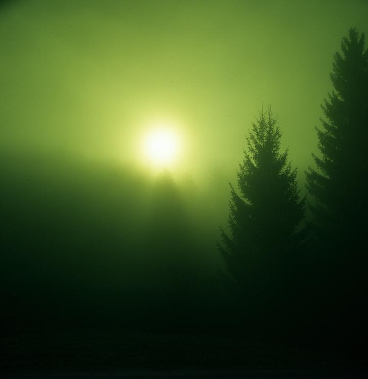 Mystik des Waldes...