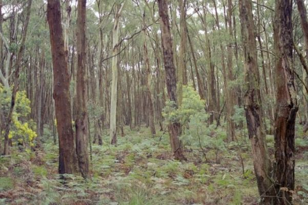 Mystik im Wald