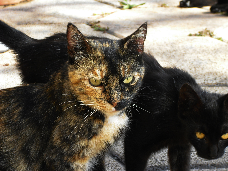 Mystik Katze