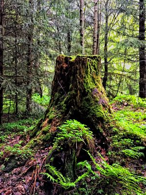 Mystique forest
