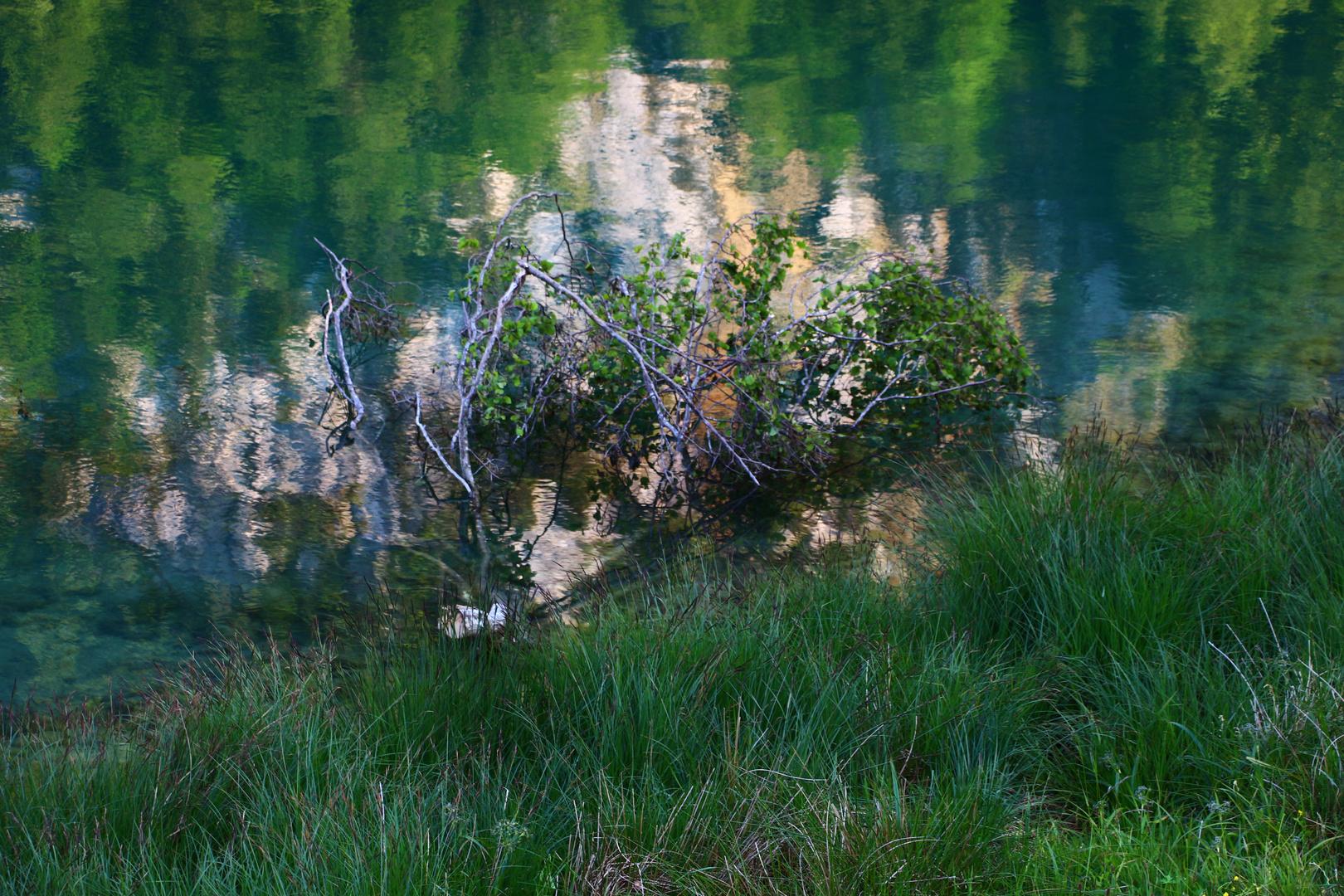 Mystisch am See