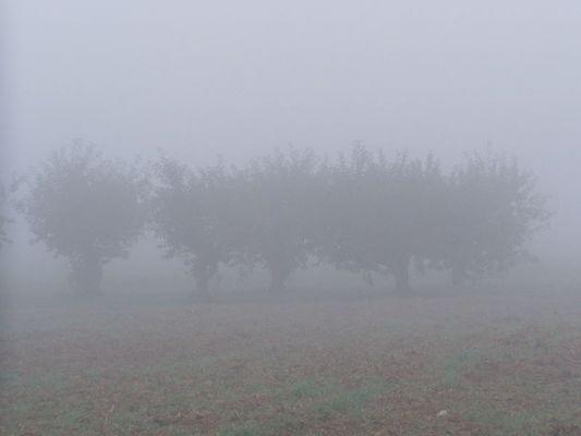 mystische Bäume