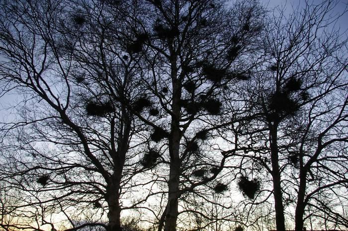 ....mystische Bäume im Abendlicht......