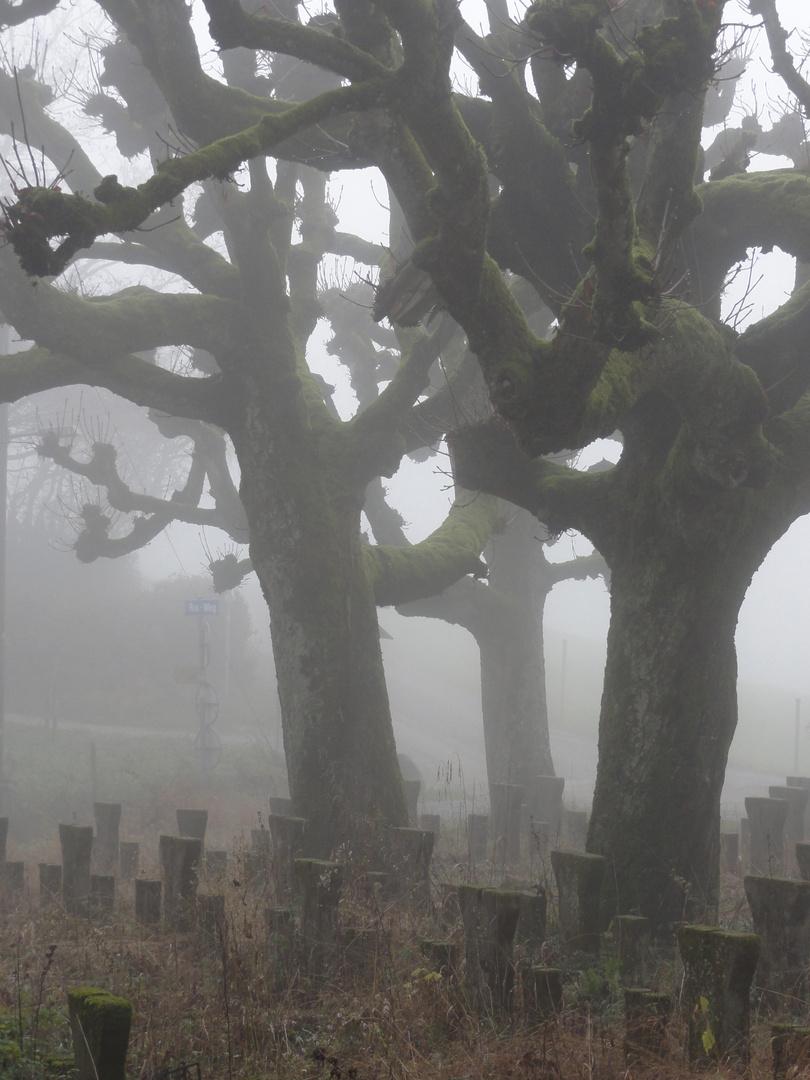 mystische Nebelstimmung