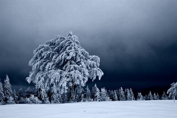 mystische Schneelandschaft