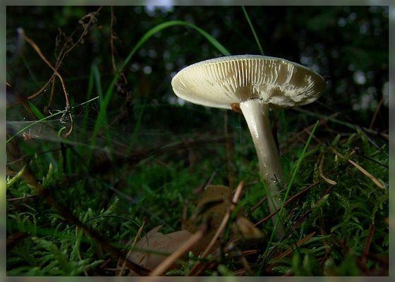 Mystische Zauberwelt der Pilze