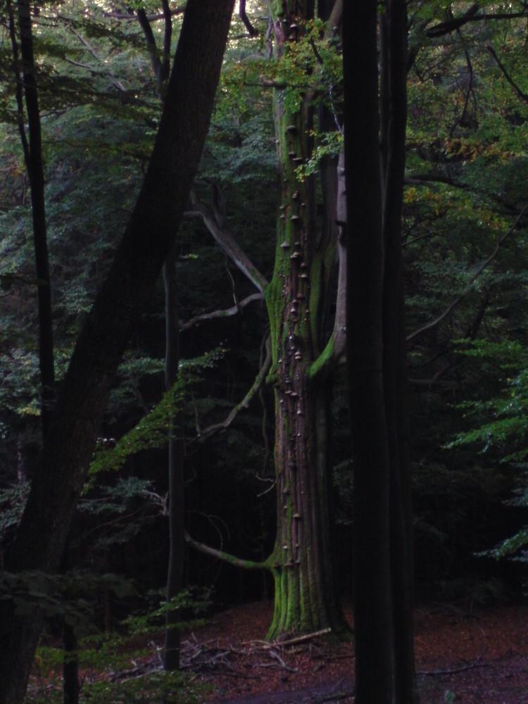 Mystischer Baum ..