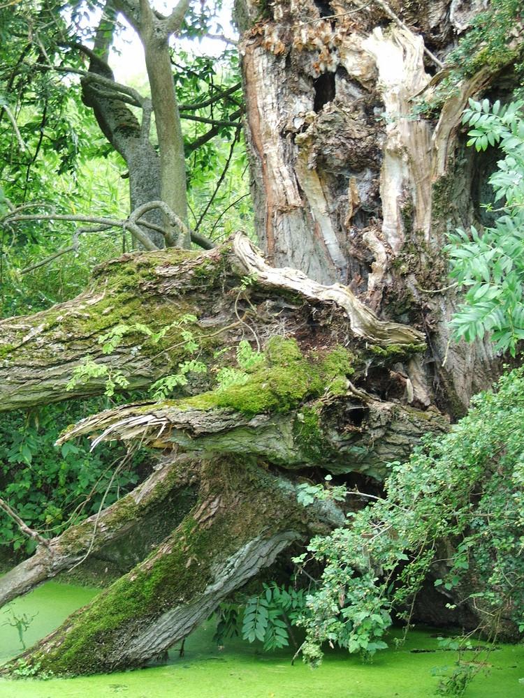 Mystischer Baum im Original